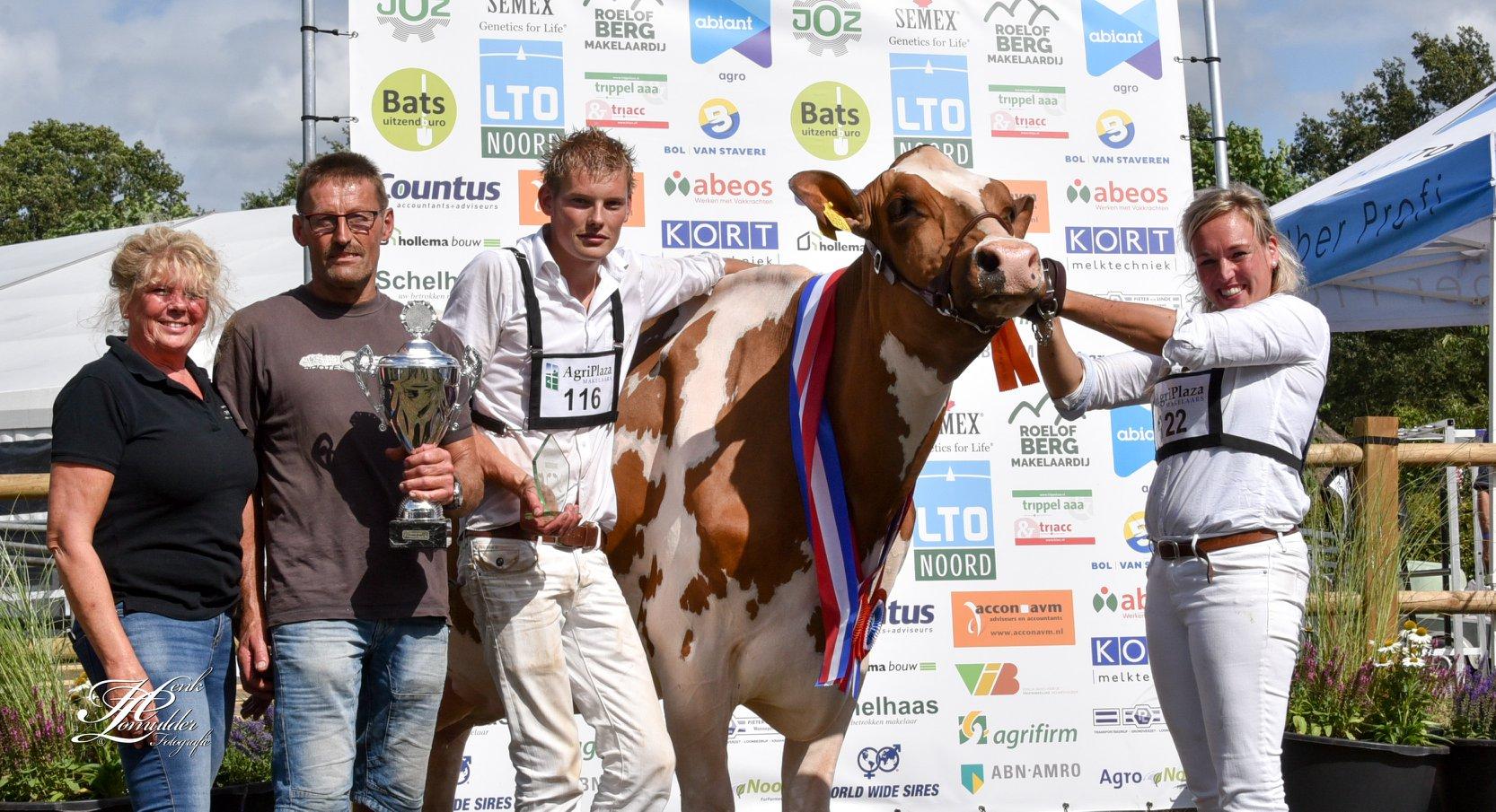 Een veekeuring met roodbonte koeien van MTS Woertink